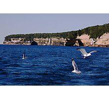 More rocks and gulls Photographic Print