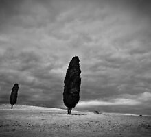 Outcasts - Midlands Highway, Tasmania by Liam Byrne