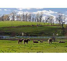 Lancaster County Pastoral Photographic Print
