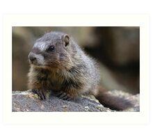 Baby Marmot  Art Print