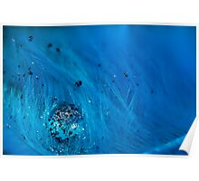 Blue Pigment on Water Droplet and Feather Poster