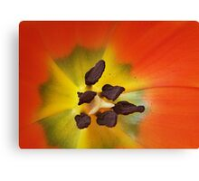 Tulip, up close! Canvas Print