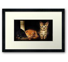 New Kittens Framed Print