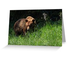 Grizz Greeting Card