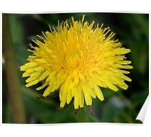 Nikon Flower Large 1 Poster
