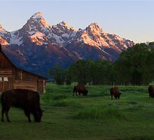 Barn and Bison Panorama by David Kocherhans
