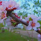 Flowering Shrub by MaeBelle