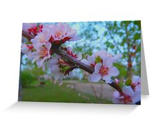Flowering Shrub Greeting Card