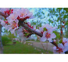 Flowering Shrub Photographic Print