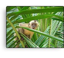 Monkey in Brazil  Canvas Print