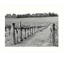 The Winter Vineyard Art Print