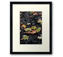 Fall comes early Framed Print