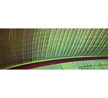 leaf lashes Photographic Print