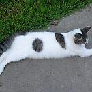 Lazy Cat by WildestArt