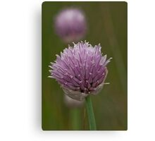The Garden Chive's WIld Relative Canvas Print
