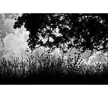 The Wind Beyond the Trees Photographic Print