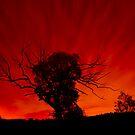 Red Sky by Bart Reardon