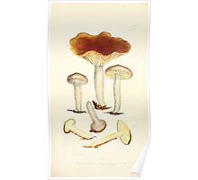 Coloured figures of English fungi or mushrooms James Sowerby 1809 0075 Poster