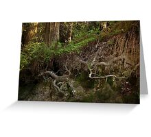 Roots of Redwoods Greeting Card