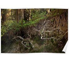 Roots of Redwoods Poster