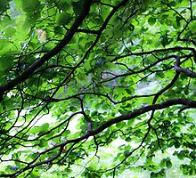 Green Leaves- Blue Ridge Parkway by Alison Simpson