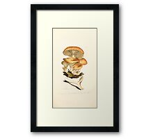 Coloured figures of English fungi or mushrooms James Sowerby 1809 0479 Framed Print