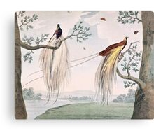 Greater Paradise Birds Painting Canvas Print