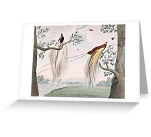 Greater Paradise Birds Painting Greeting Card