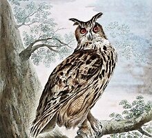 Great Horned Owl Illustration by goldenmenagerie