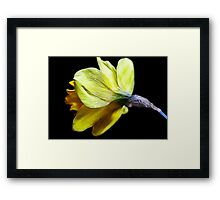 Glowing Gold Framed Print