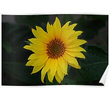 Out on it's own....Sunflower Poster