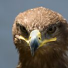 Steppe Eagle 2 by bubblebat