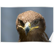 Steppe Eagle 2 Poster