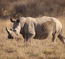 White Rhino by Steve Bullock