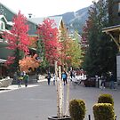 Autumn in Whistler, Canada. by joycee