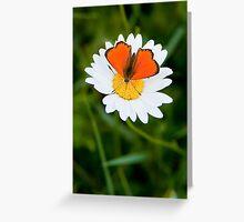 Orange Fluo Greeting Card