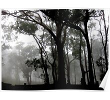 Gumtrees in the park, Picnic Point, Toowoomba. Poster
