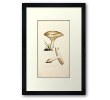 Coloured figures of English fungi or mushrooms James Sowerby 1809 0907 Framed Print