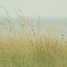 At the Sea by Anne Staub
