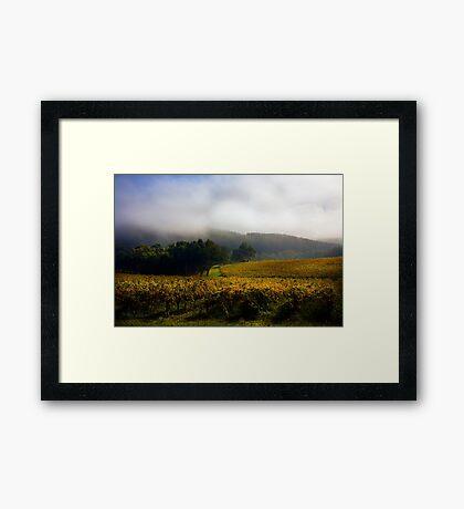 Vineyard Adelaide Hills in Autumn Framed Print