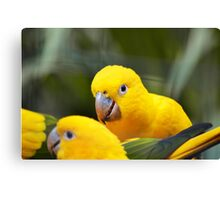 Three yellow birds Canvas Print