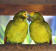 Lovebirds by renatosaltori