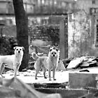 Beijing - Hutong&#x27;s dogs. by Jean-Luc Rollier