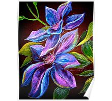 Flowers...Clematis Poster
