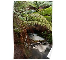 Junee Caves - Mt Field National Park Poster