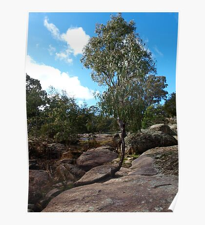 Eucalyptus tree at Hughes Creek - Victoria, Australia Poster
