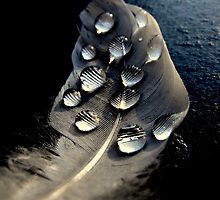 Water Drops On Feather by Jack Hood