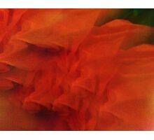 Tissue In Bloom Photographic Print