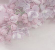 Oh So Gentle - Lilac Sprig Macro by Sandra Foster