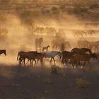 Mustangs by Nilah M.